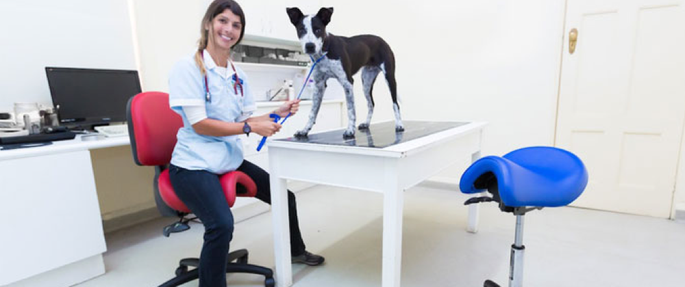 Bambach Saddle Seat in a vVeterinary clinic